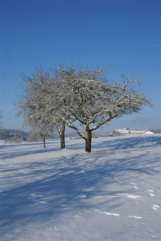 Unser winterlicher Obstgarten