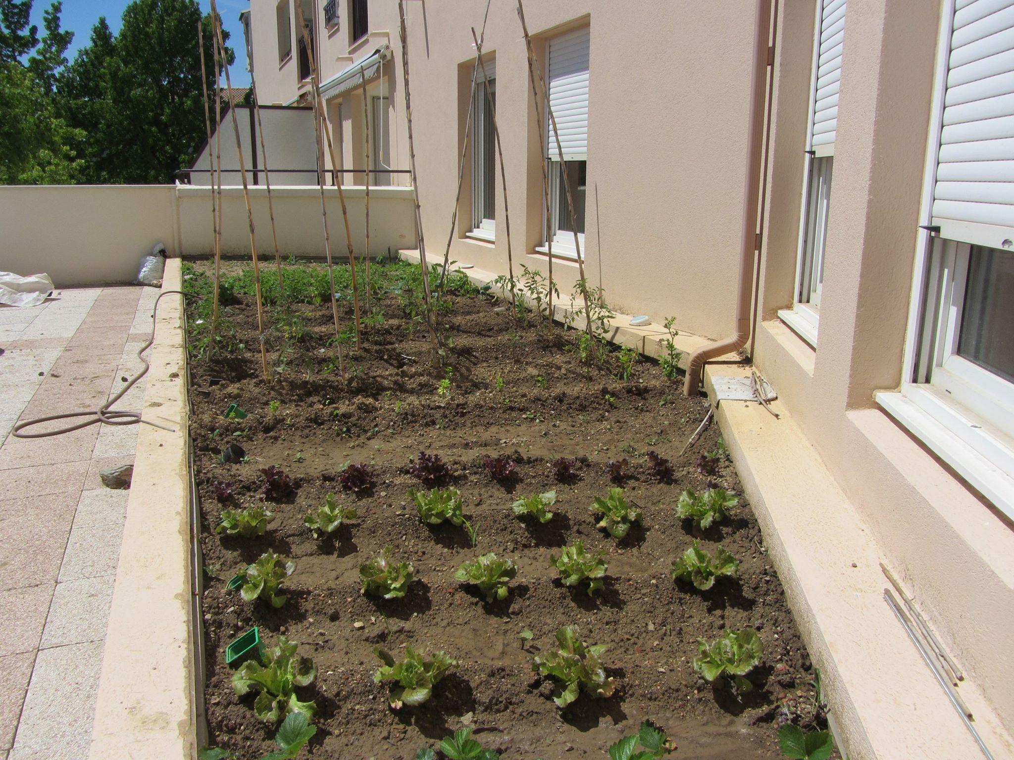 Jardin potager entretenu par les adhérents