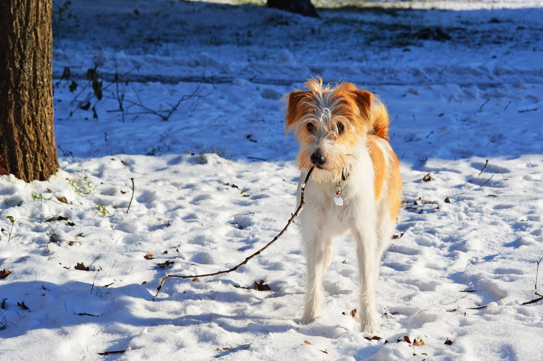 Juche, juche - es fällt der erste Schnee...