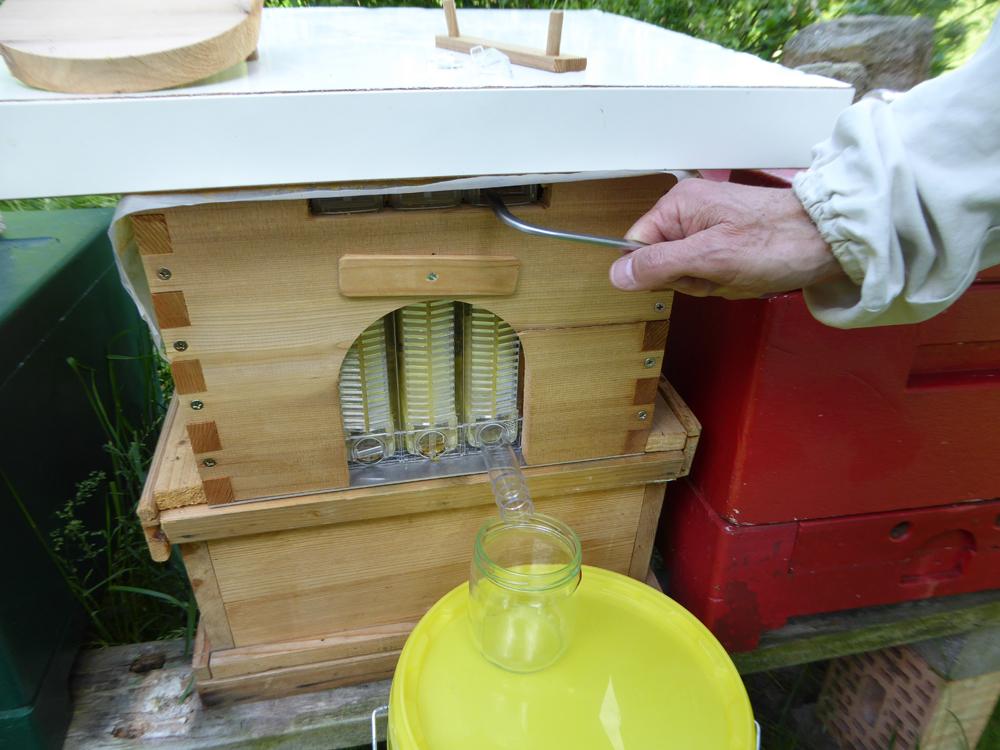 Durch eine 90-Grad-Drehung mit einem Hebel werden die Wabenzellen geöffnet, so dass der Honig nach unten fließen kann.