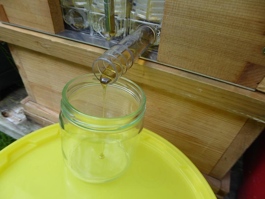 Der Honig läuft von der Wabe ins Glas, ohne Wachsreste oder andere Verunreinigungen!
