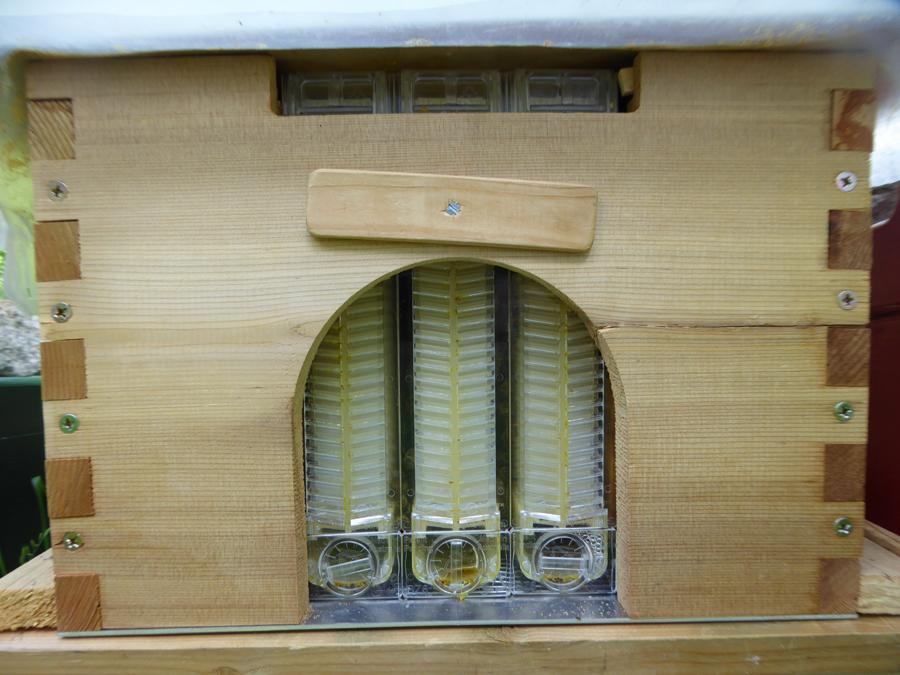 Für die Honigernte geöffnet, ist bienendicht! Die Beute wurde leicht gekippt, damit der Honig gut abläuft.