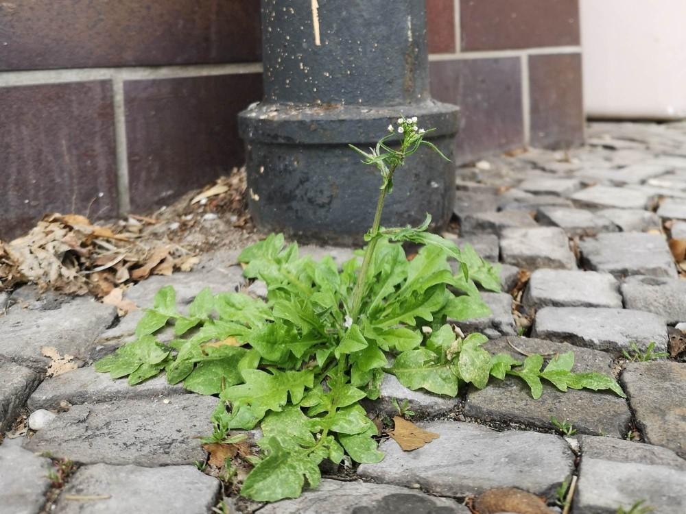 Frühling im urbanen Raum