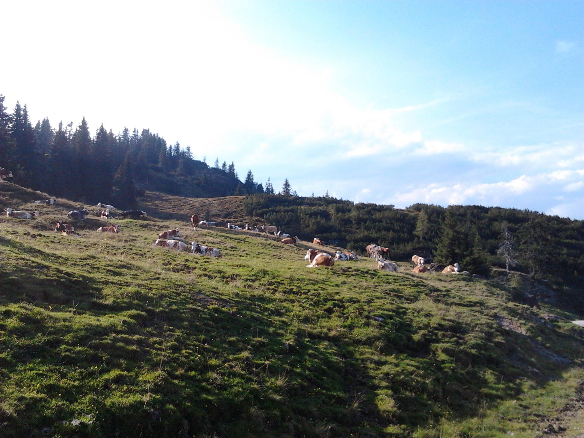 Die Tiere geniesen den Herbst auf der Alm.