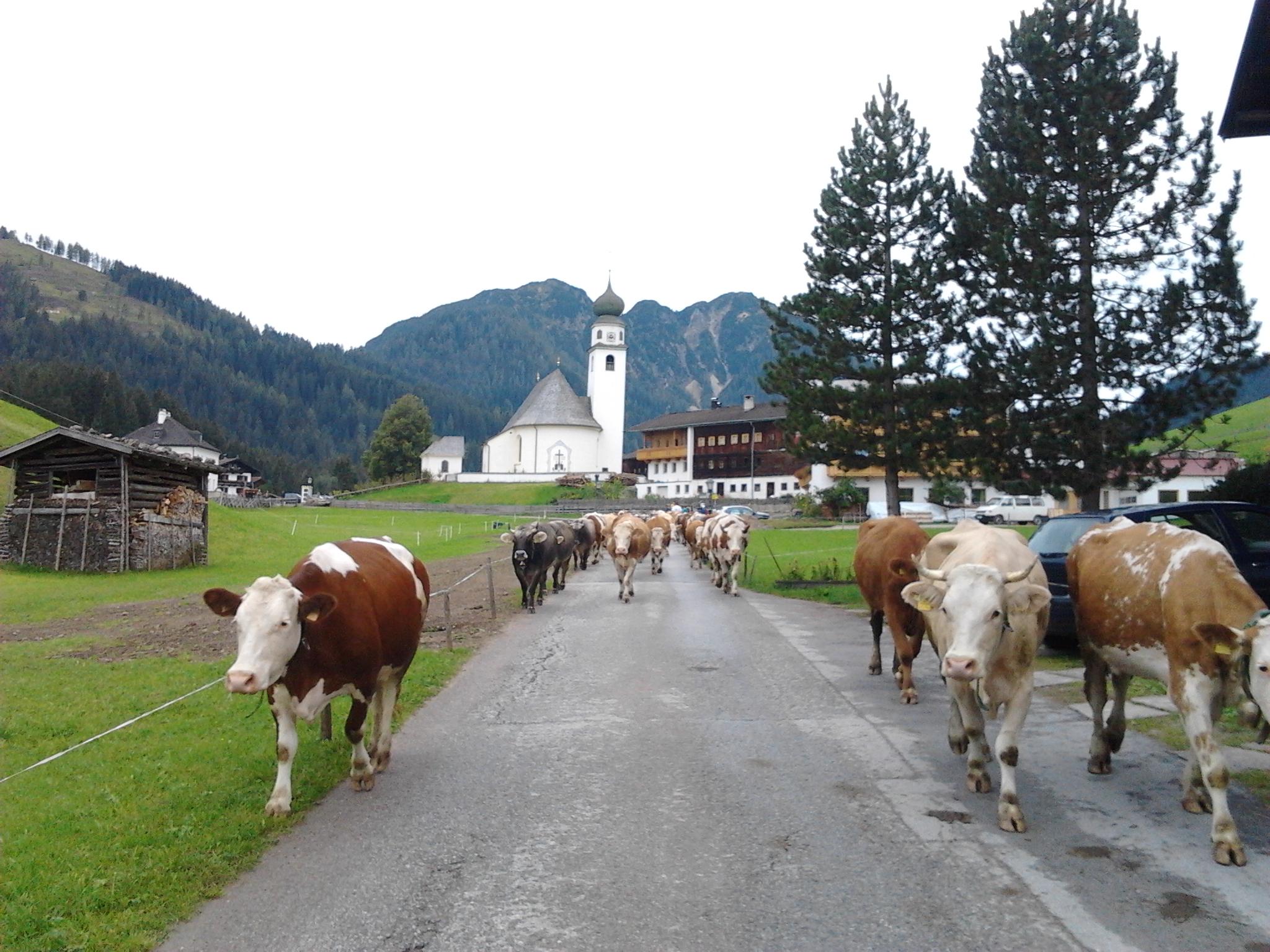 Almabtrieb durch das Dorf Thierbach.