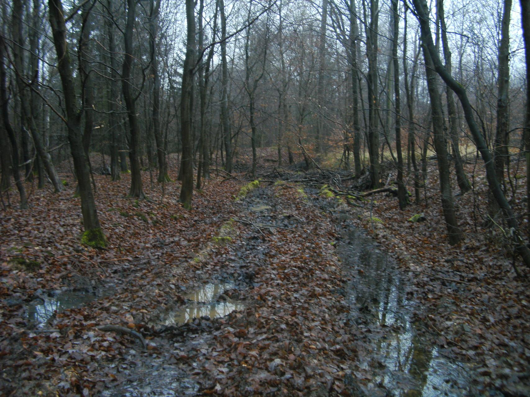 Böse Spuren haben die Holzrücker hinterlassen