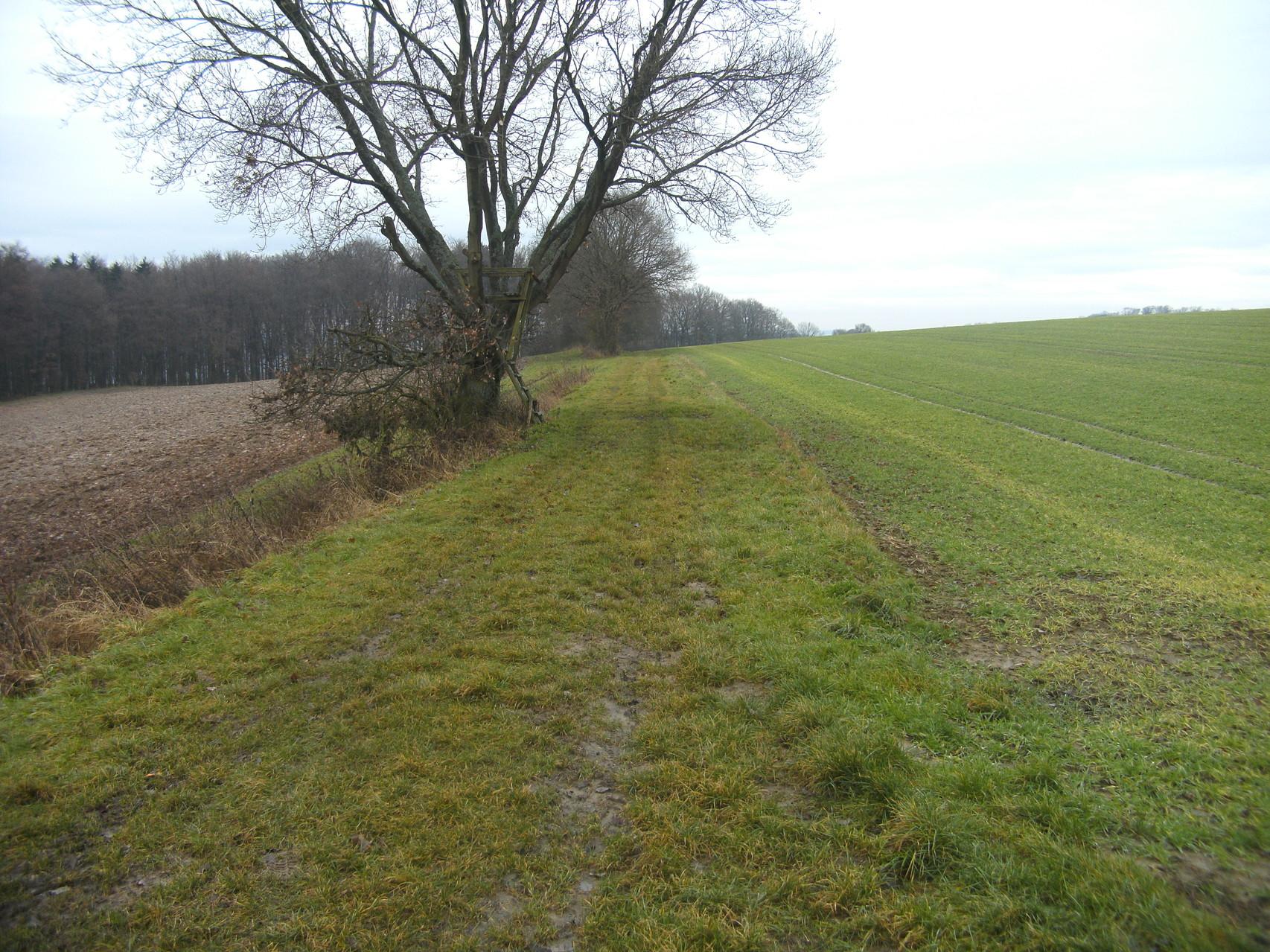 Blick Richtung Eschenau: Die Trasse als Feldweg. Kaum noch Steigung ist zu verzeichnen