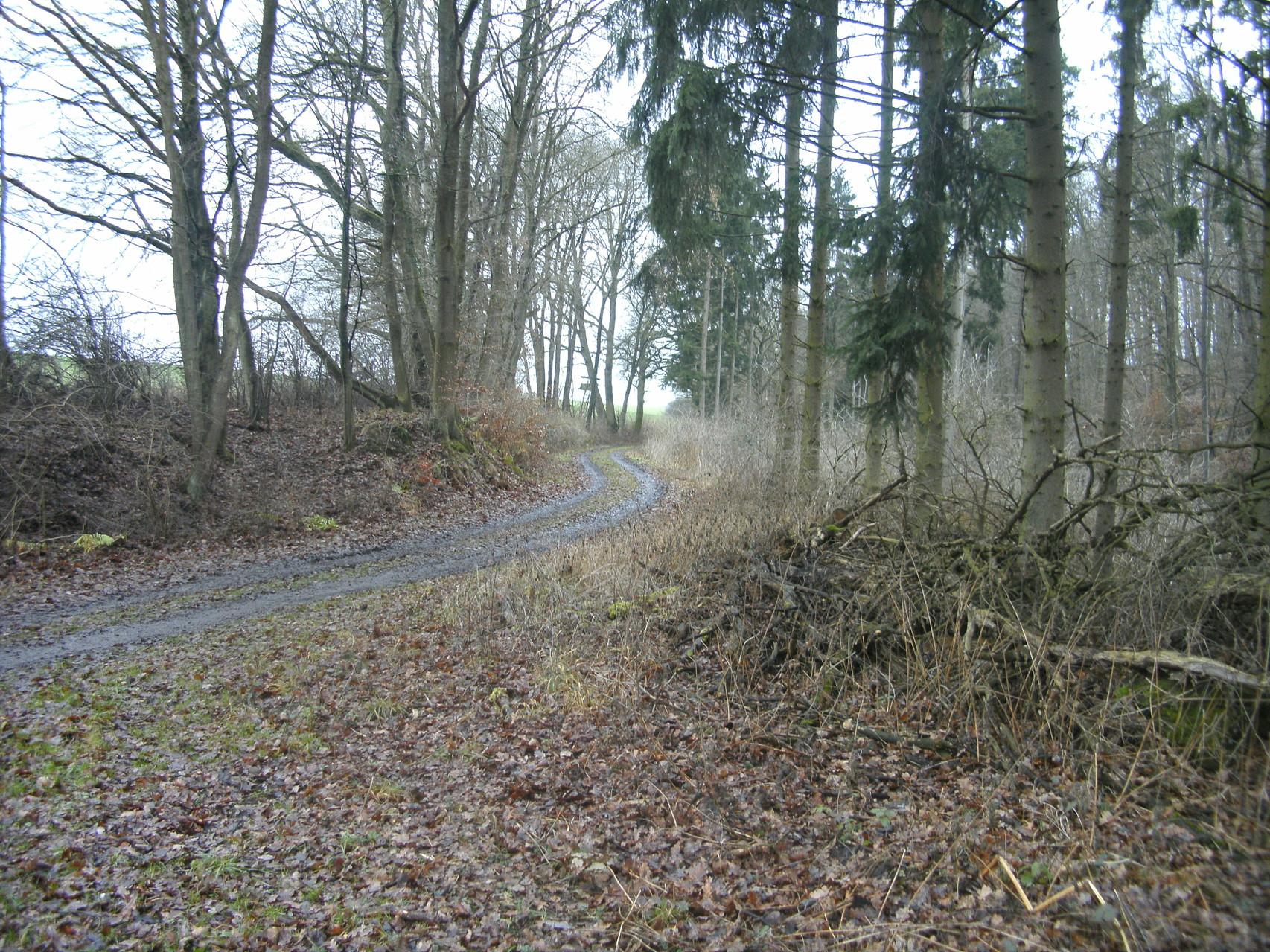 Nun Blick Richtung Beselicher Kopf: Die Trasse verlässt Straße nach Hofen, folgt den Taleinschnitt