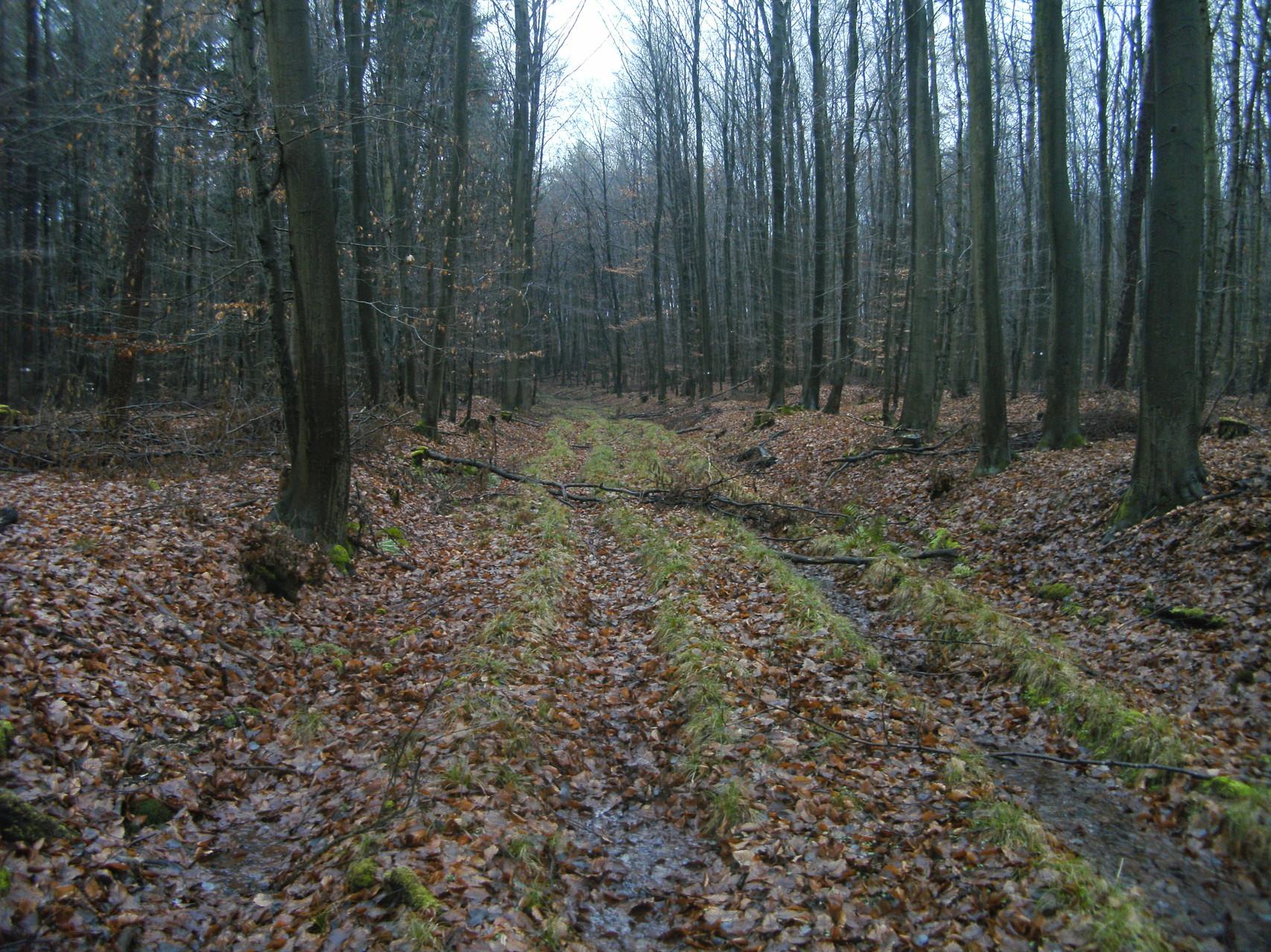 Auf dem Feld oberhalb der Kehre ist nichts mehr von der Trasse zu sehen. Aber im Wald