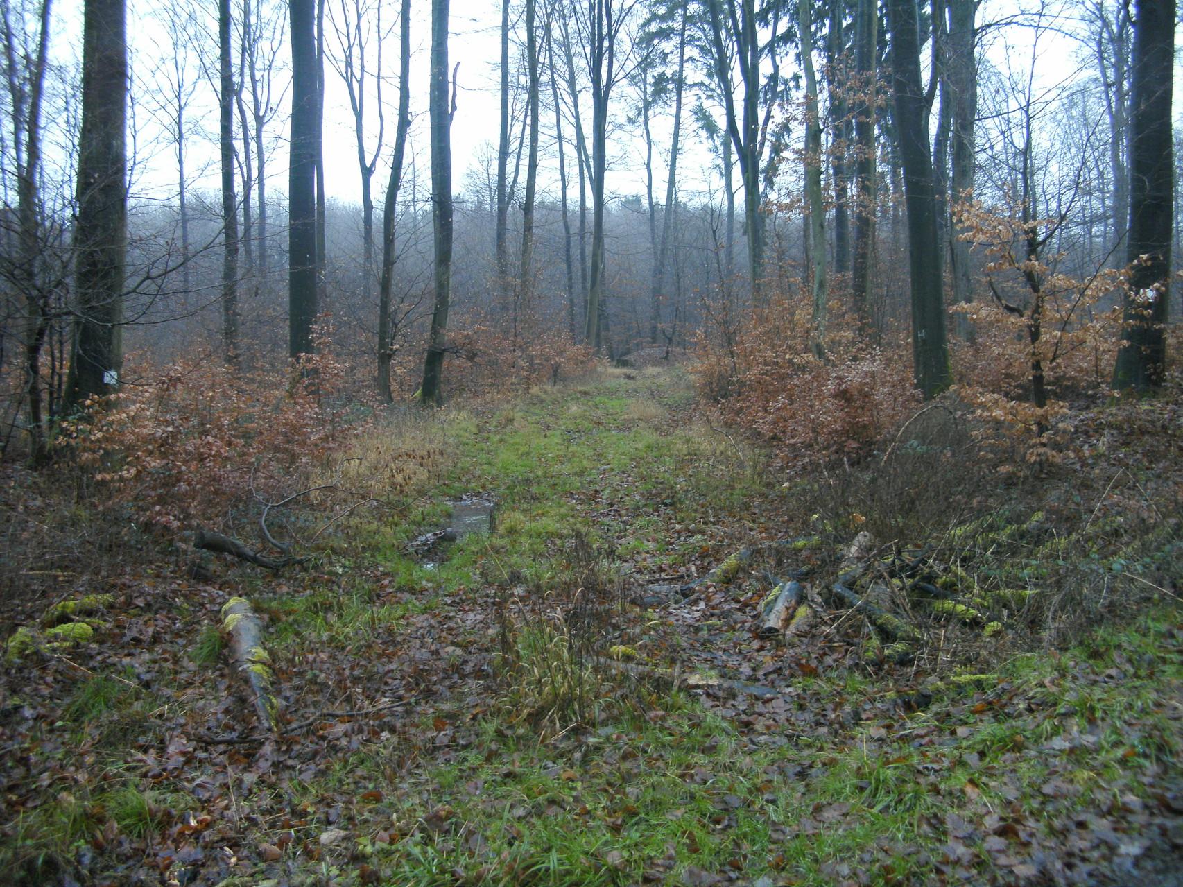 Weiter mit Blick Richtung Beselicher Kopf im Wald