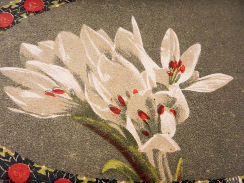 Эдельвейсы, рисунок на нотной обложке