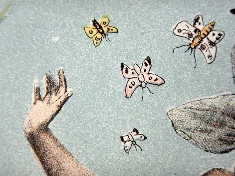 Бабочки, старинный рисунок