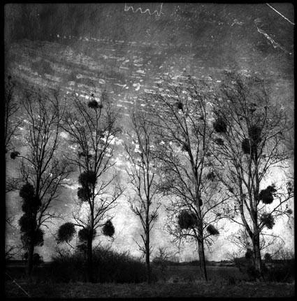 Grivilliers, Oise - Mnémosis series by Philippe Bréson