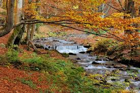 La Dourbie est une rivière sauvage préservée