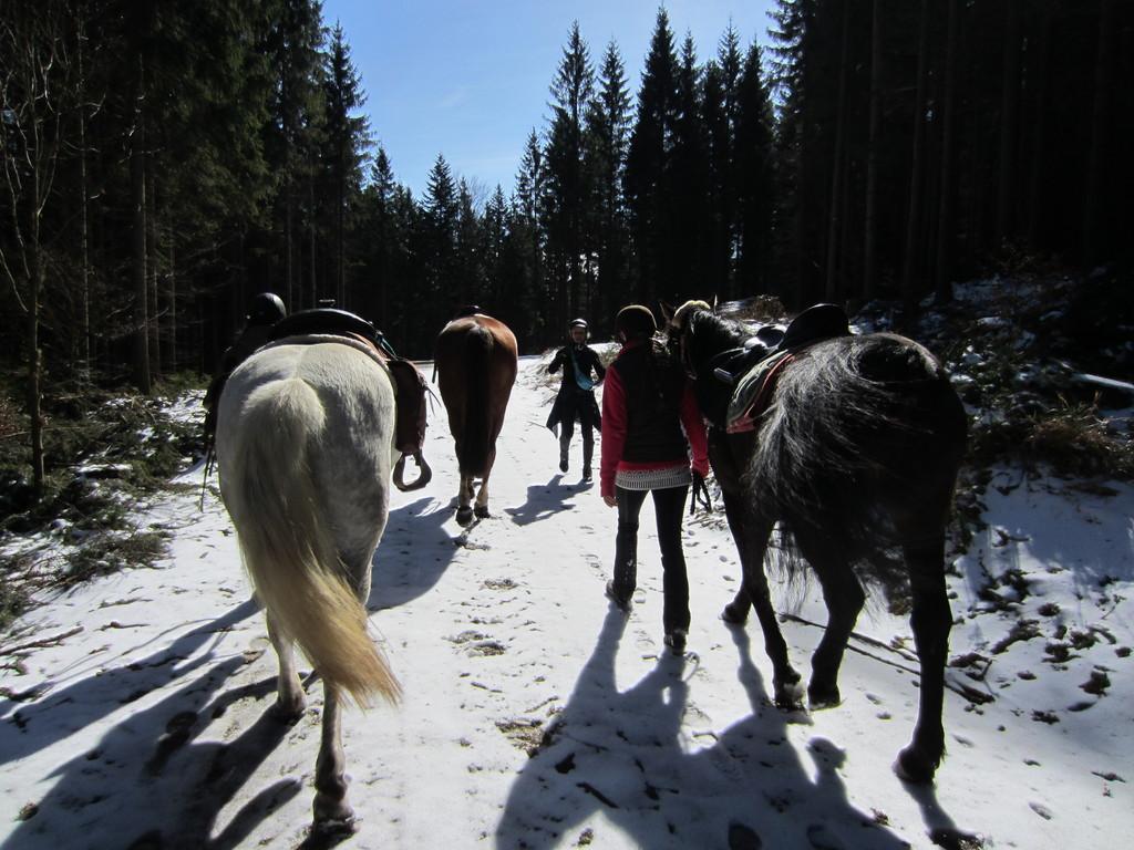 Wander - Reiten
