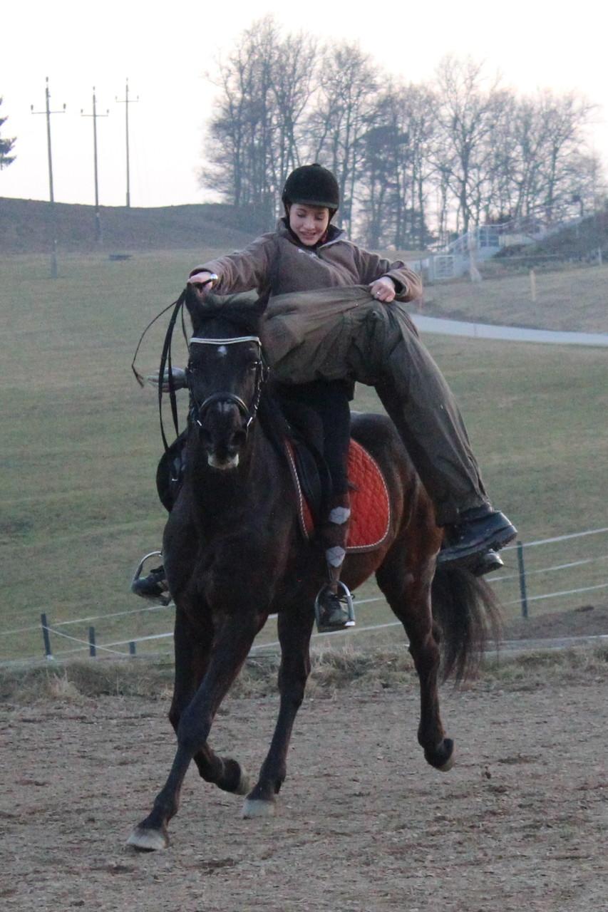 Training für den Theaterauftritt mit dem Pferd