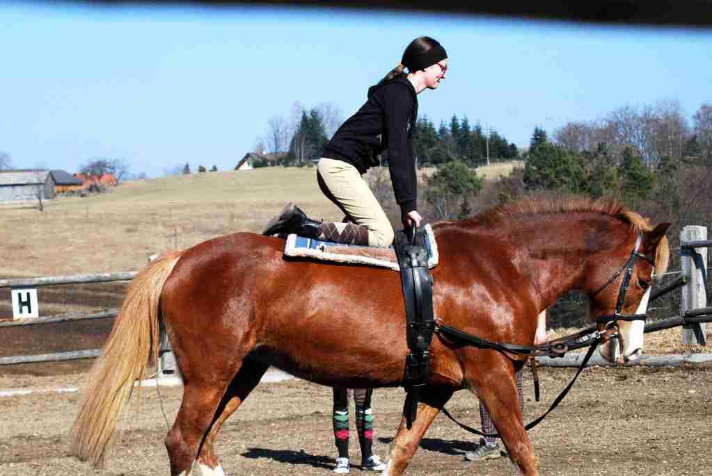 Knien am Pferd