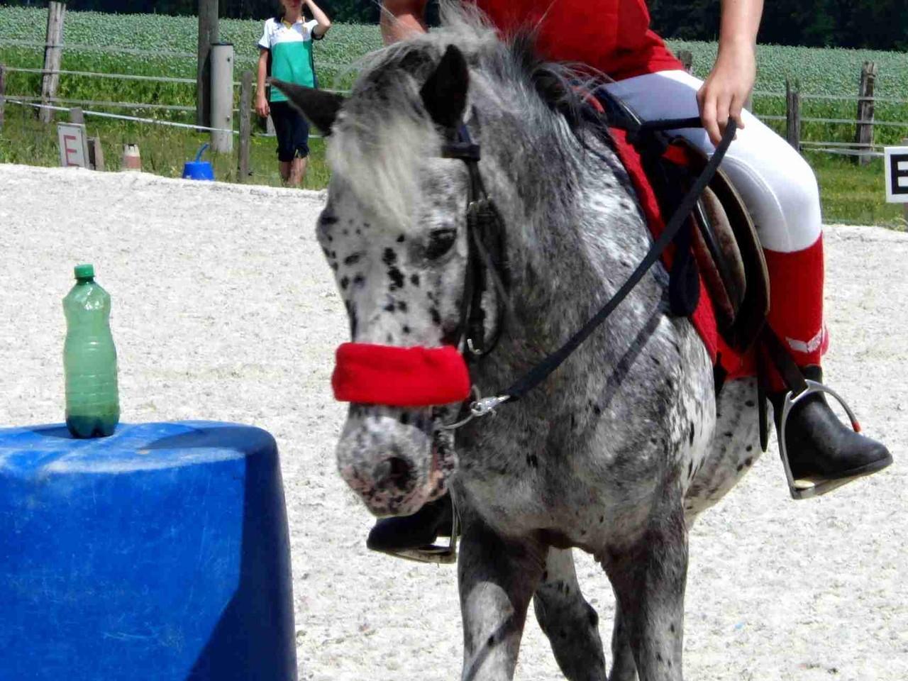 Armani am Mounted Games Turnier