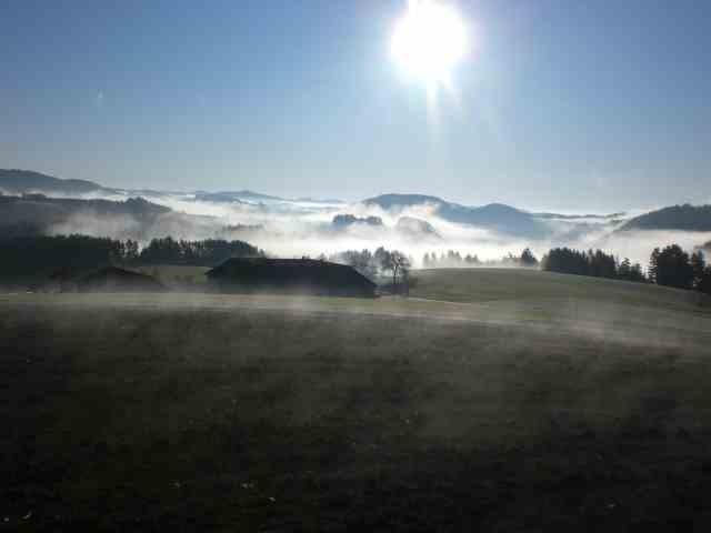 Nebelschwaden im Herbst