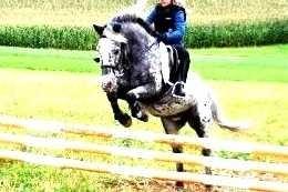 Armani bei der Reiterpassprüfung - Springen