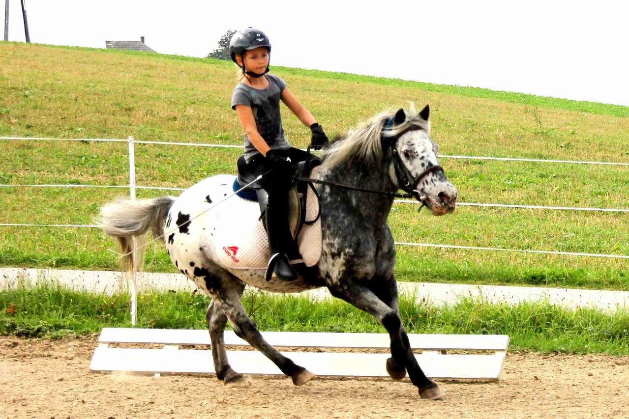 Armani bei der Reiterpassprüfung - Dressur