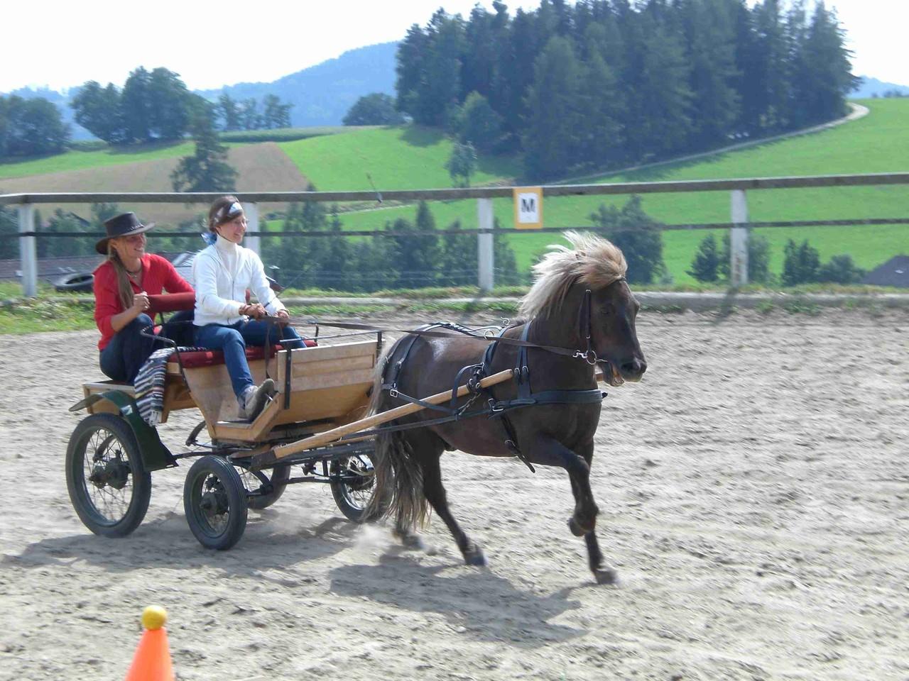 Pony Kutsche