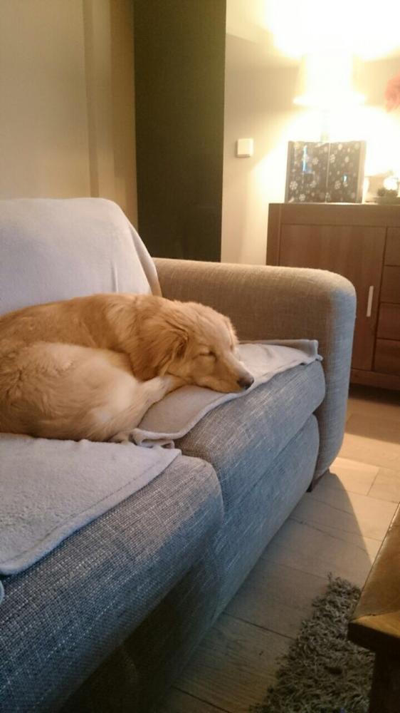 Arthur wünscht uns allen einen relaxten Feierabend❤️