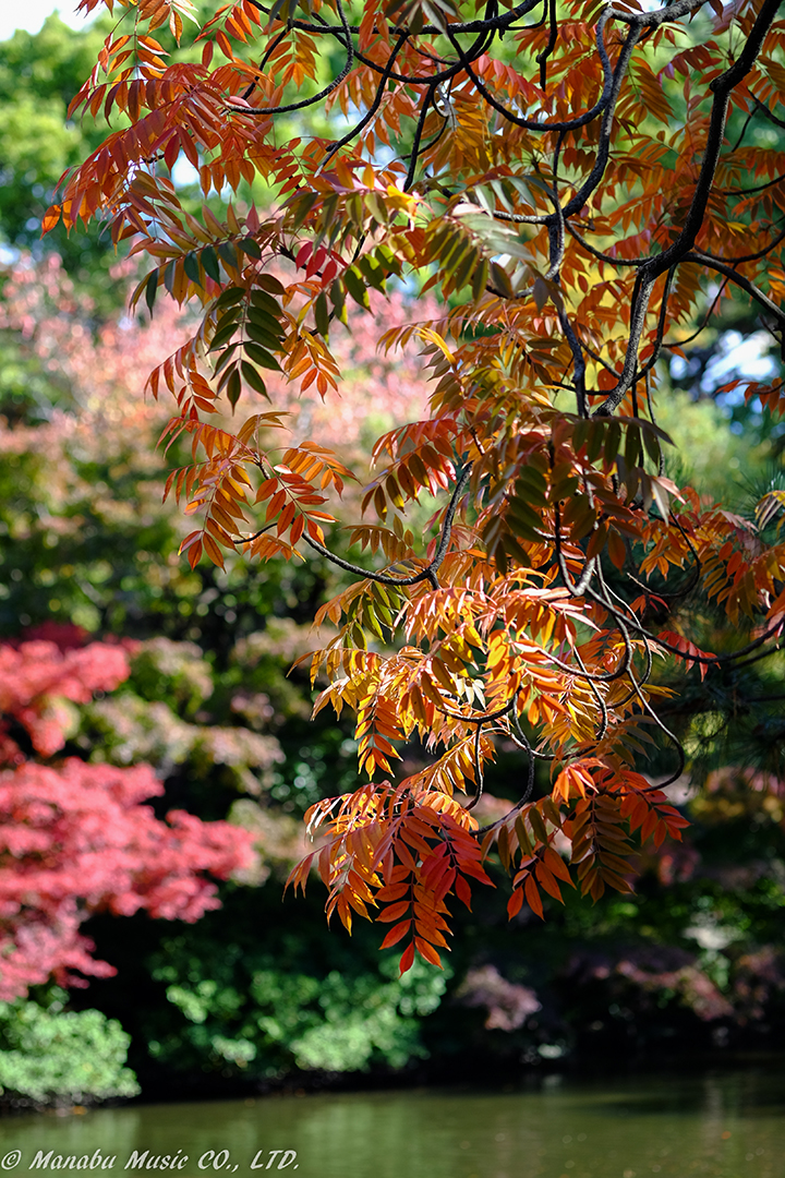 鶴舞公園の「秋の池」 X-E2 XF60mm