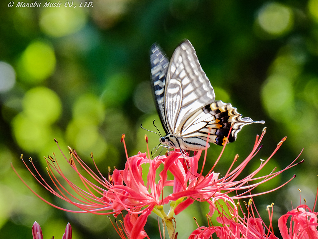 蝶が舞う秋の公園 X-E2 XF100-400mm