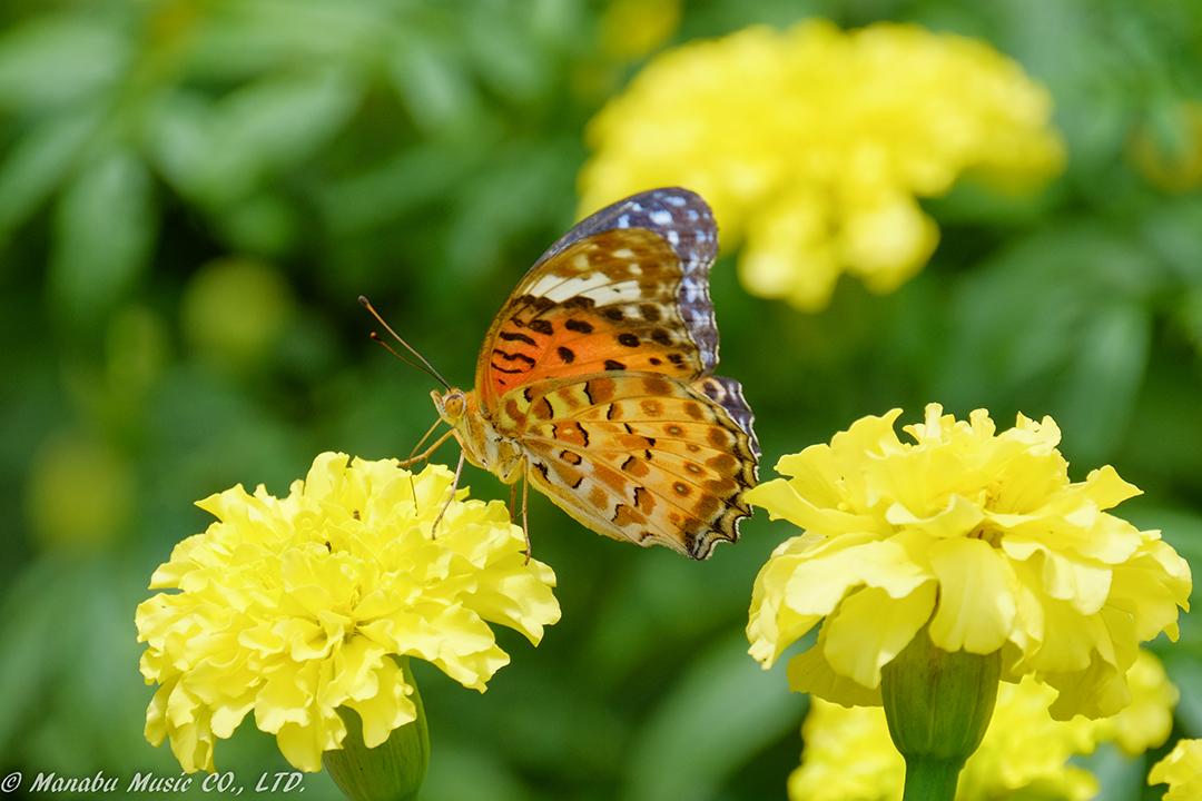 Butterfly X-E2 XF100-400mm