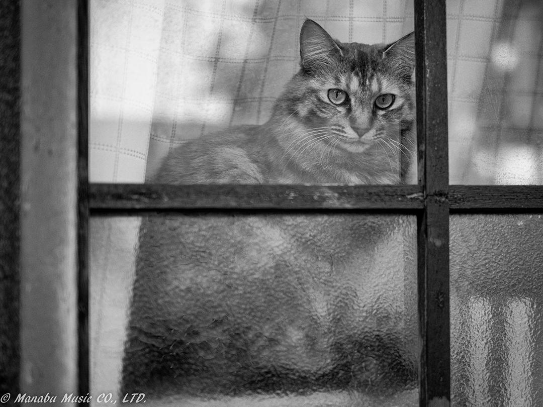 窓際の猫  X-E2 XF35mm F1.4
