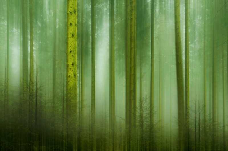 "<span style=""color:#666666!important;""> Mystic forest  -  © -  2014 </span>"
