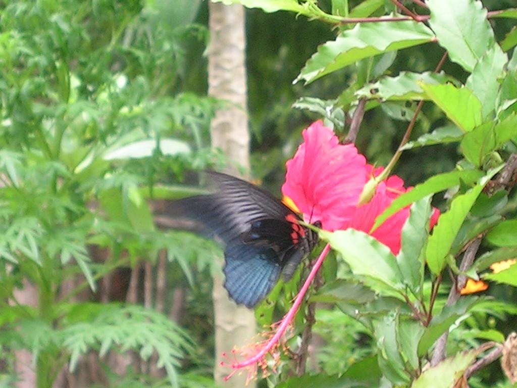 Una mariposa gigante