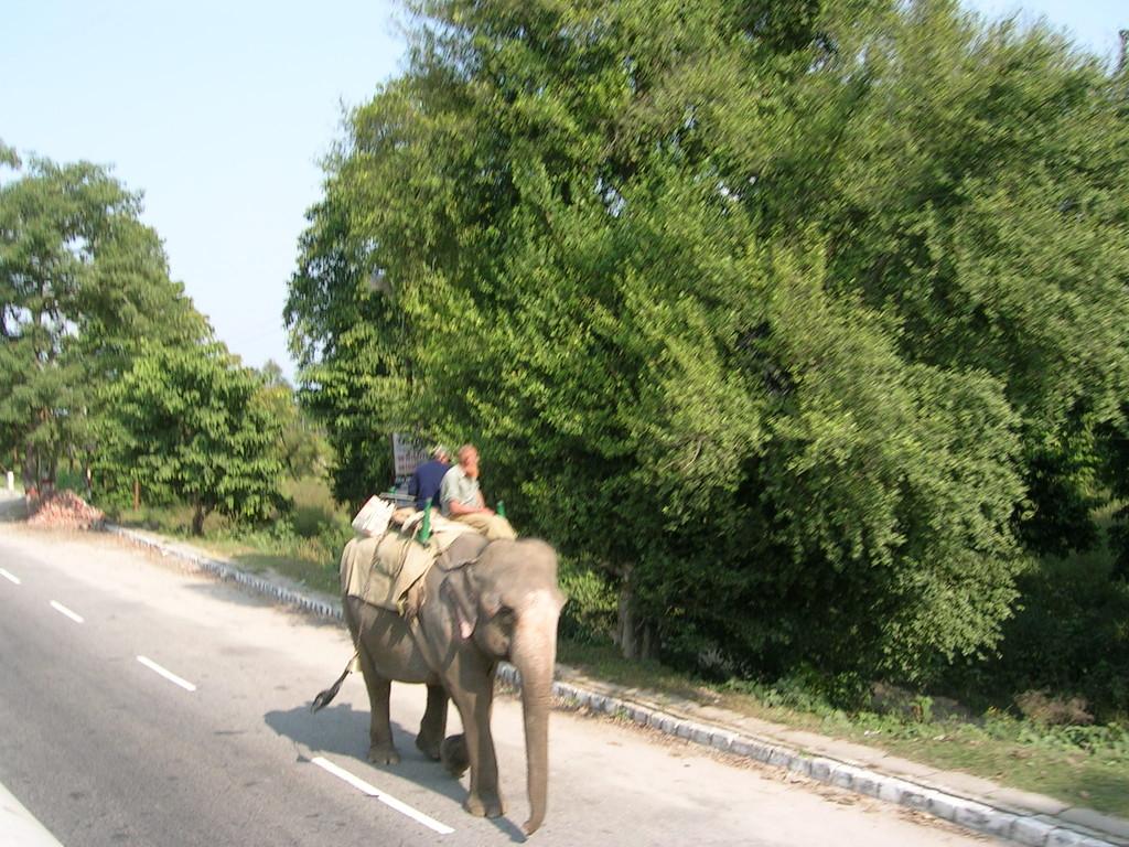 De nuevo elefantes por la carretera