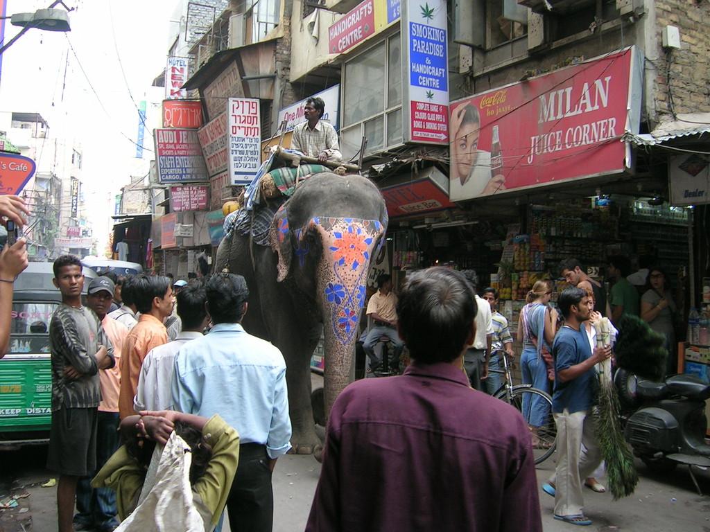 Elefantes por la calle