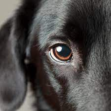 Haben Hunde 3 Augenlider?