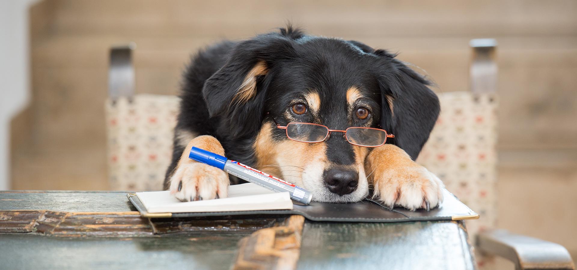Haben Hunde ein Zeitgefühl?