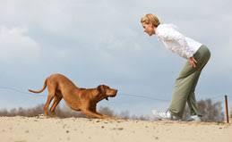 Übungsideen für den Spaziergang