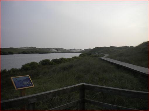 Schilfgebiet bis zum Strand von Wittduin