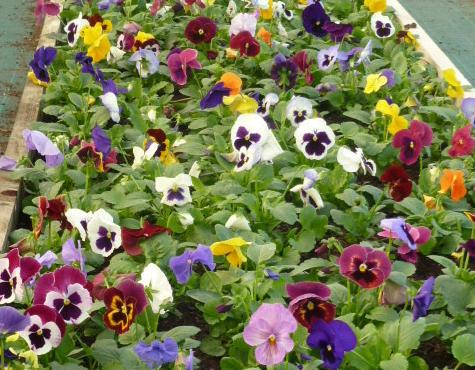 Fleurs d'Automne - Fleurs de Toussaint