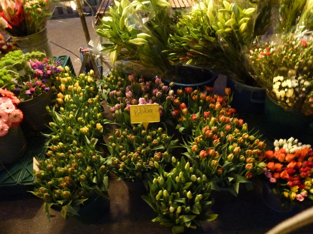 Tulipes maison, bien plus fermes que celles d'importation!