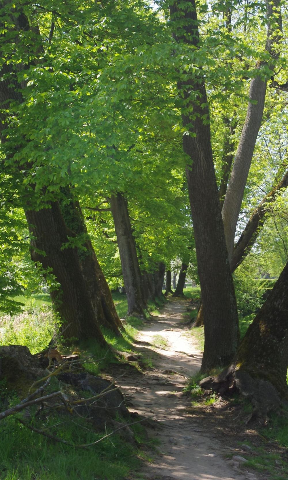 Wandern durch Wald am Hesselberg