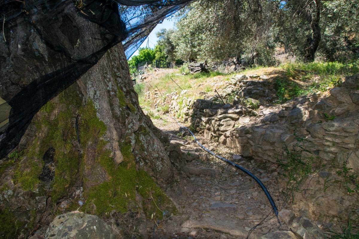 olivier pamako premium