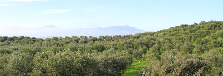 Plaine de Messara