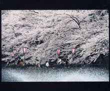 No.30297 至福の春 滝井 千恵子(静岡市)