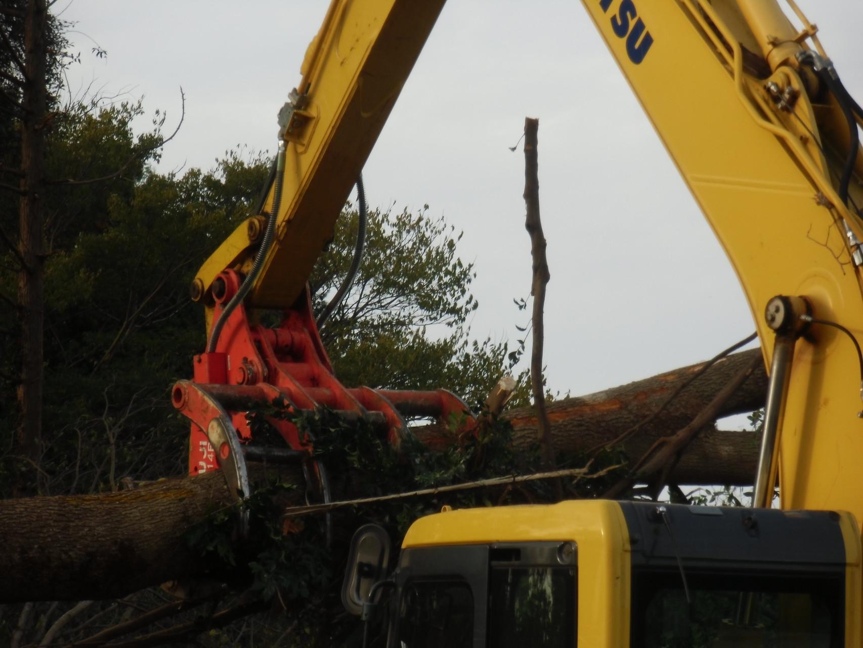 伐採した樹木を掴んで移動します