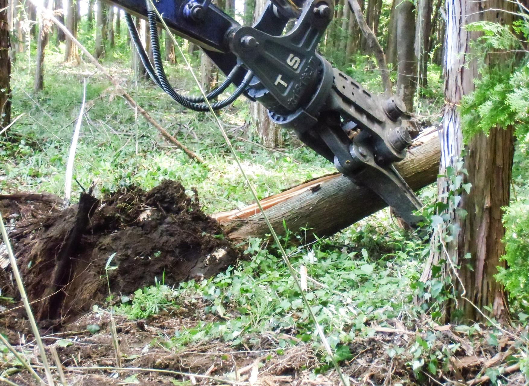 樹木の自重を利用して倒します