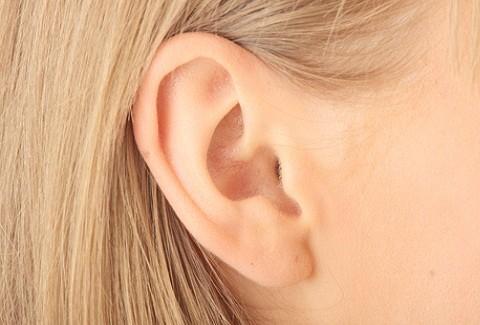 Pabellón auricular adulto.