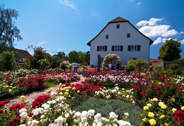 Rosen Sortimentsgarten Nöggenschwiel