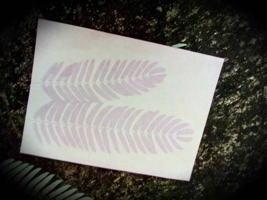 Anthotype eines Blattes vom Seidenbaum, hergestellt mit Blaubeersaft